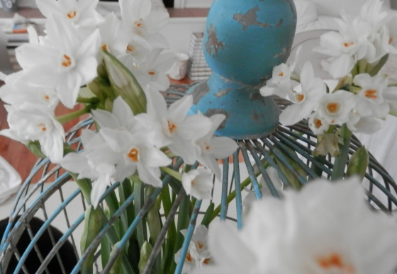 oh! heavenly paper whites!
