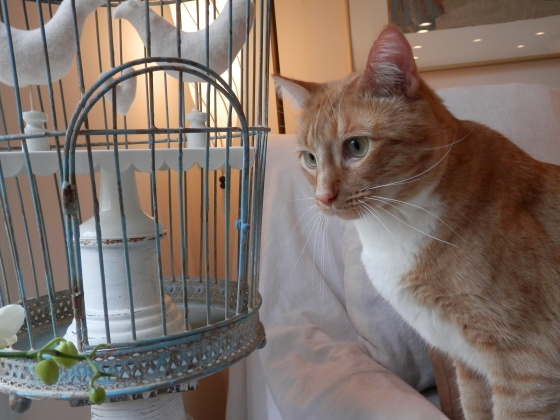 oatbran thinking about those love birds