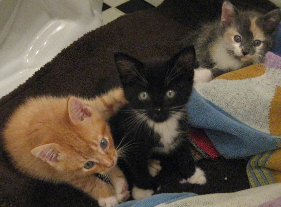 from left to right:  otis, ellis, lilly