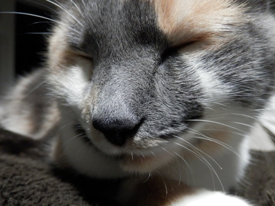"""i'm awake, i'm awake, i'm aaawaakzzzzzzz..."" ~ lilly"