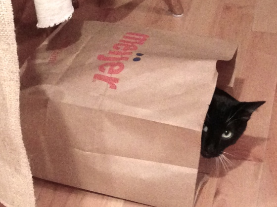 one cat in a bag is a warm cat...