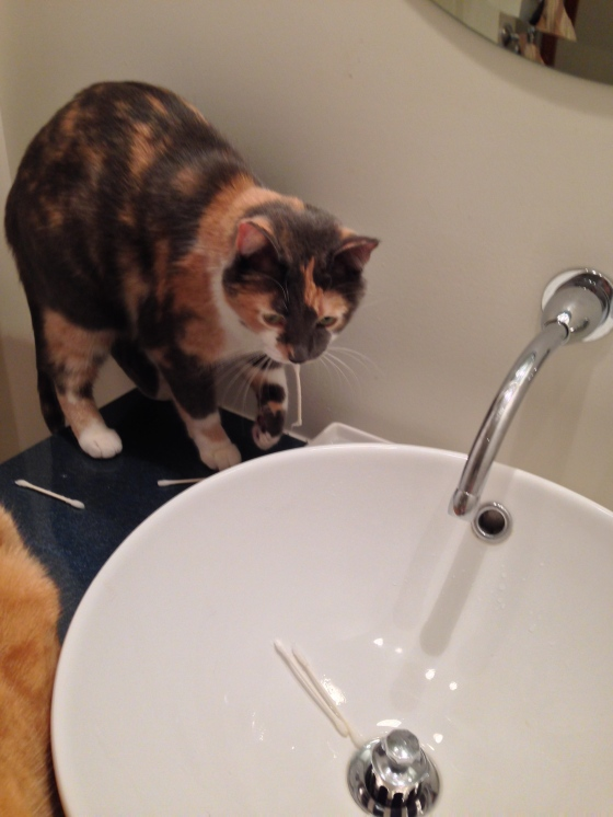 """i'll put them all in the sink ~ perfect!""  ~lilly"