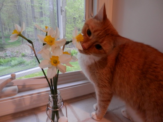 """""""the only thing prettier than a flower is me"""" ~ the oatbran"""